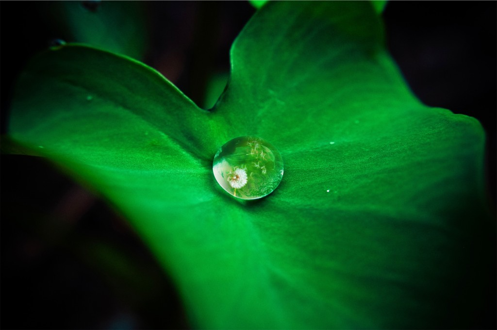 What I love about this picture is you think it's just a drop on a leaf but it's NOT! Kinda like how if you look closer you see things are between God and us.