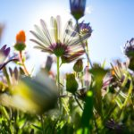 What the Wildflowers Teach Us